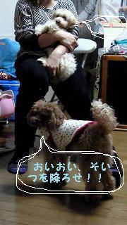 201011132309000_3