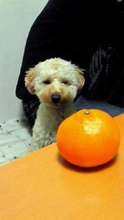 橙色の丸いヤツ②